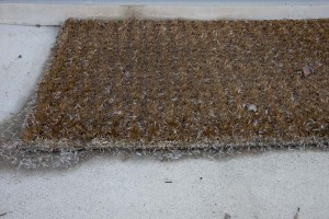 Coyote bush seed litter--stuck on doormat. It can get everywhere...