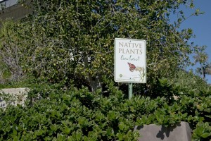 Native Plants Live Here Sign_WEB