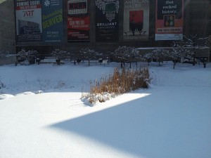 Zigzag shadow on snow with dried plants